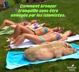 Cochon au soleil