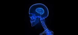 idiot-cerveau-brain